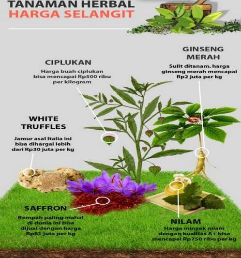 5 Obat Herbal yang Ampuh Perbesar Ukuran Penis